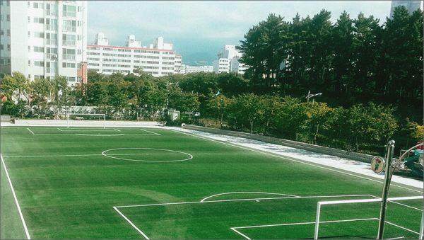 Luxdezine Turf Football Jeju